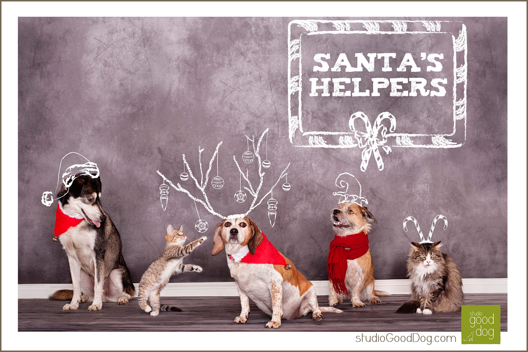 Five Acres Animal Shelter annual Christmas card | studio Good Dog Blog